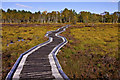 NO4399 : Boardwalk on Parkin's Moss, Muir of Dinnet by Alan Findlay