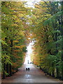 SK2669 : Avenue of beech trees, Chatsworth by Andrew Hill