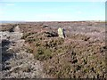 NZ6401 : Boundary stone on Howdale Hill by Christine Johnstone