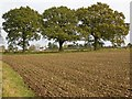 SP0556 : Three oaks by the footpath by David P Howard