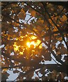 SX9065 : Light on leaves, Asda car park, Torquay by Derek Harper