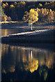 NH2425 : Lone birch tree beside Loch Beinn a' Mheadhoin, Glen Affric : Week 43