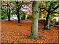 H4672 : Fallen leaves, Omagh County Hospital by Kenneth  Allen