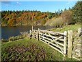 NT5132 : A field gate at Cauldshiels Loch by Walter Baxter