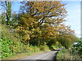 TQ4856 : Autumn along Ovenden Road by Ian Yarham