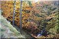 SJ9969 : Cumberland Brook by Bill Boaden