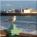 TQ3103 : Gull at King's Road promenade by Oast House Archive