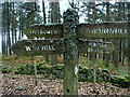 SK1985 : Footpath sign among the trees by Andrew Hill