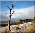 SD4575 : Beach clean at far Arnside by Karl and Ali