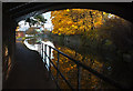 SJ5182 : Autumn colours on the Bridgewater Canal by Ian Greig