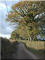 SX7494 : Trees lining the road east of Pitton Cross by David Smith
