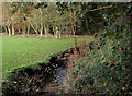 SO8091 : Cut Throat Brook in Broughton, Shropshire by Roger  Kidd