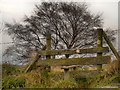 SJ9692 : Stile and Tree (Cown Edge Way) by David Dixon