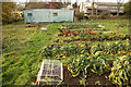SK7156 : Organic vegetable garden by Richard Croft