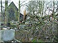 SJ9700 : Fallen tree in churchyard by Ray Durrant