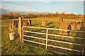 SK7156 : Seven standing stones by Richard Croft