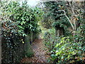 SK3180 : Footpath parallel to Bushey Wood Road by Andrew Hill