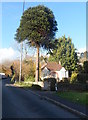 SO6102 : Tall tree and small bungalow, Aylburton by John Grayson