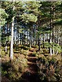 NH9818 : A path at the Osprey Viewing Centre in Loch Garten Reserve by Walter Baxter