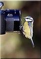 NH9818 : Watch the birdie by Walter Baxter