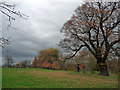 TQ3173 : Brockwell Park (8) by Stephen Richards