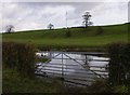 SD4866 : Waterlogged field, Ancliffe Lane by Ian Taylor