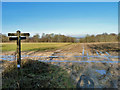 SU9315 : Muddy junction on South Downs Way by Robin Webster