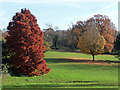 TQ3170 : Autumnal park, Norwood Grove (1) : Week 47