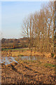 TQ7724 : Shelterbelt near the River Rother by Oast House Archive