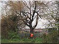 TA1429 : Tree trimming on Poorhouse Lane, Hull by Ian S