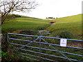 ST6660 : Spring near Farmborough by Nigel Mykura