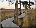 SU9041 : The new boardwalk, Thursley National Nature Reserve (2) : Week 50