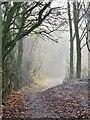 TA1333 : Logland Nature Reserve, Kingston upon Hull : Week 50
