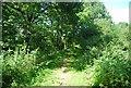 TQ0337 : Wey South Path by N Chadwick