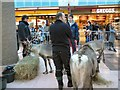 SJ9494 : Reindeer in Clarendon Mall by Gerald England