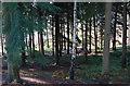 SO7778 : Inside Eymore Wood : Week 52(part2)