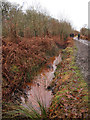 SJ7486 : Muddy ditch by Stephen Craven