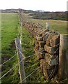 NZ9507 : Wall on Cleveland Way by Derek Harper