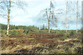NN8416 : Felled forestry at Anmore Wood by Steven Brown