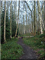 SK2666 : Woodland footpath by Andrew Hill