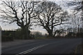 SD5720 : Trees on a bend in Dawsons Lane by Ian Greig