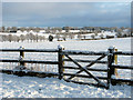 TG3005 : Snow-covered fence, Surlingham : Week 3