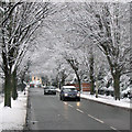 TL4557 : Snowy Brooklands Avenue by John Sutton
