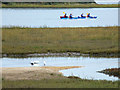 SY9888 : Little egrets and canoeists near Shipstal Point by Phil Champion