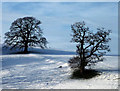 SD4980 : Trees in the snow, Dallam Park, Milnthorpe by Karl and Ali