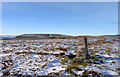 NY8224 : Trig point on Mickle Fell by Trevor Littlewood