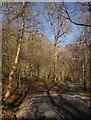 SX7878 : Path in Yarner Wood by Derek Harper
