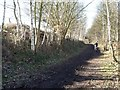 SE3004 : Cyclist on the Trans Pennine Trail, near Ben Bank by Christine Johnstone
