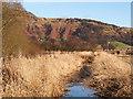 NO1601 : Drainage ditch : Week 6