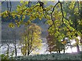 NN5220 : Loch Voil through the trees by Alan Reid